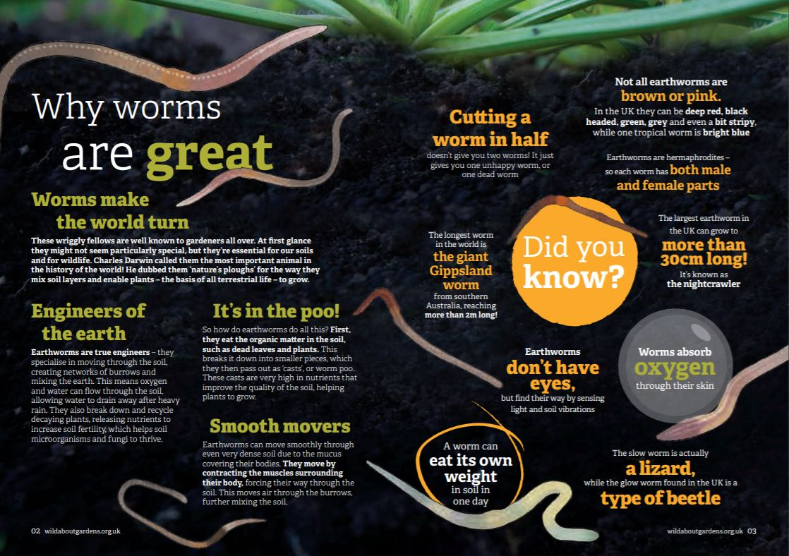 Why worms are great?