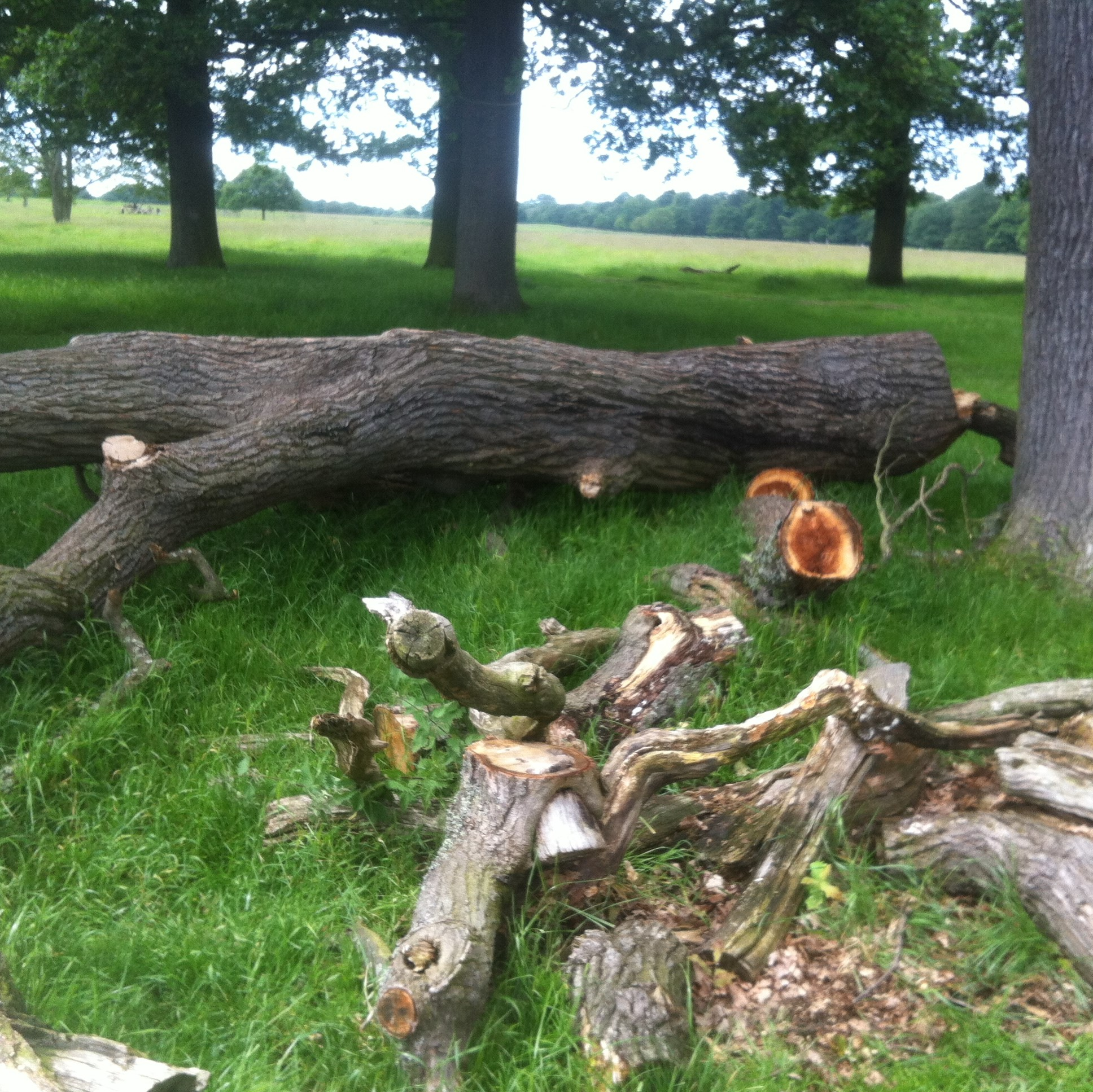 Deadwood habitat in Richmond Park (London)